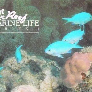 1984 Australia Post Stamp Pack - Great Barrier Reef - Marine Life 1