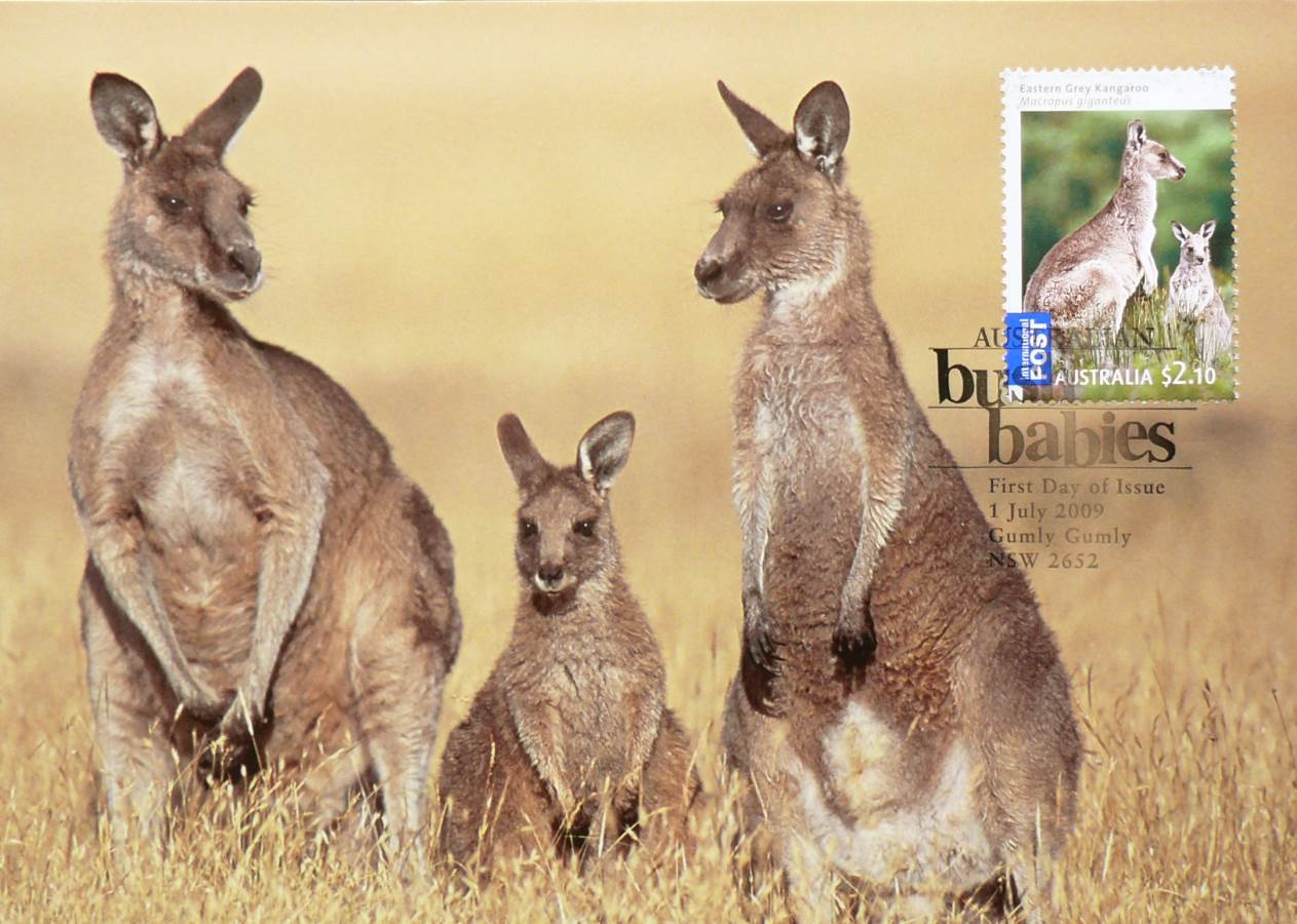 2009 Australia Post Maximum Card - Kangaroo Bush Babies