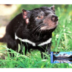 2009 Australia Post Maximum Card - Tasmanian Devil