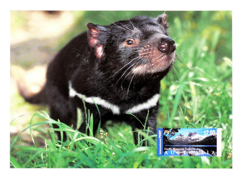 2009 Australia Post Maximum Card - Tasmanian Devil