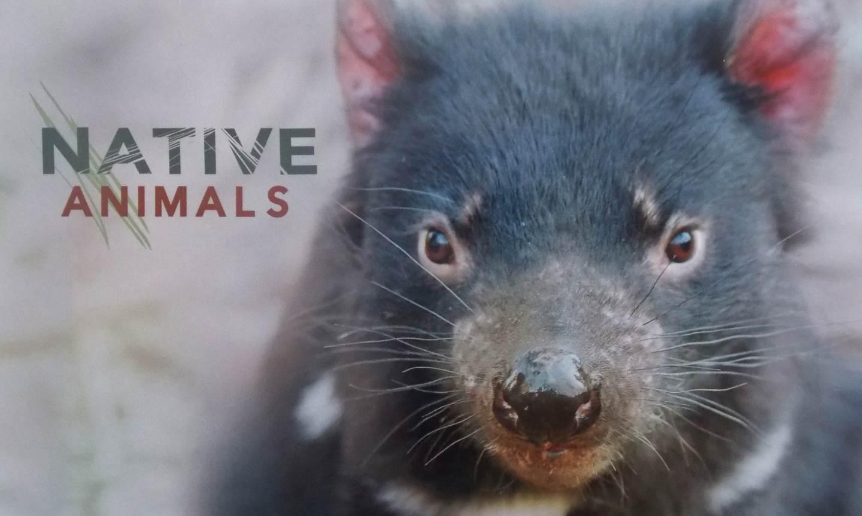 2015 AUSTRALIA POST NATIVE ANIMALS STAMP PACK